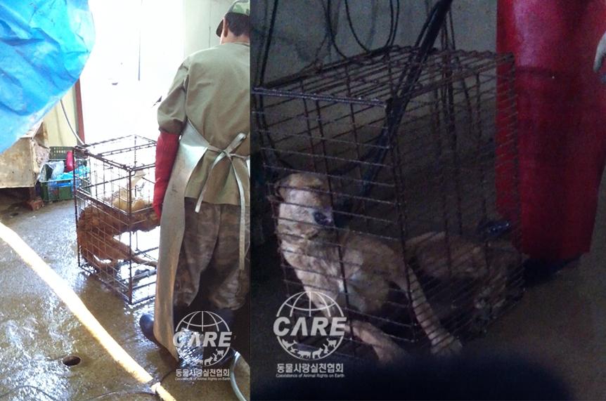 https://www.koreatimes.co.kr/www/nation/2018/09/371_255643.html?utm_source=sendinblue&utm_campaign=Korean_Supreme_Court__Killing_dogs_by_electrocution_is_cruel!&utm_medium=email