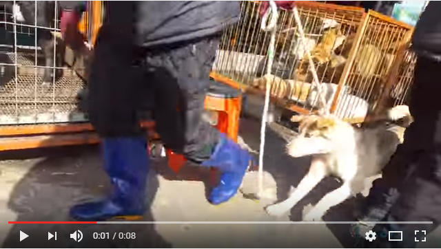 Small dog is being dragged to be slaughtered - Moran Market, Seongnam, Korea