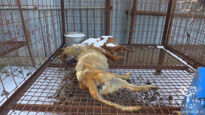 National Olympic Committees: Take a stand in Pyeongchang 2018 against the dog and cat meat trade!