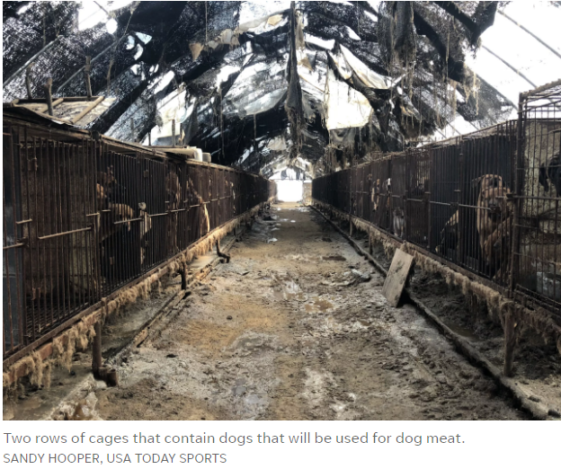 https://www.usatoday.com/story/sports/winter-olympics-2018/2018/02/12/inside-grim-scene-korean-dog-meat-farm-miles-winter-olympics/328322002/?utm_source=sendinblue&utm_campaign=Dutch_skater_sparks_dog_meat_controversy_at_PyeongChang!__Only_2_Days_Left_of_PyeongChang_2018!&utm_medium=email