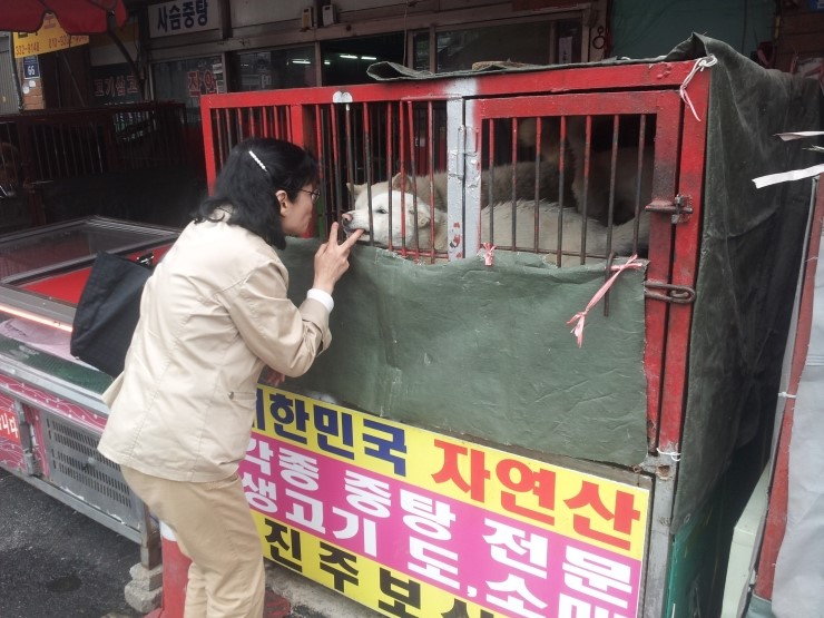 KARA's Legal Information Booklet for the ending of dog meat consumption