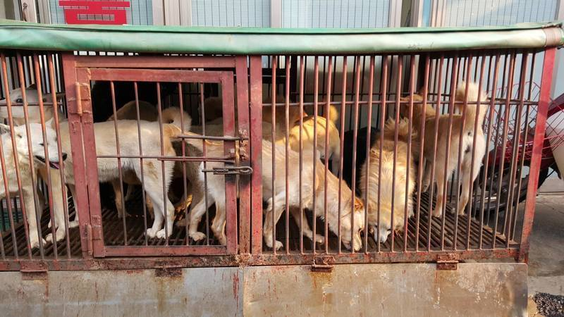 Catholic Church in South Korea‐ Stop Promoting the Consumption of Dog Meat