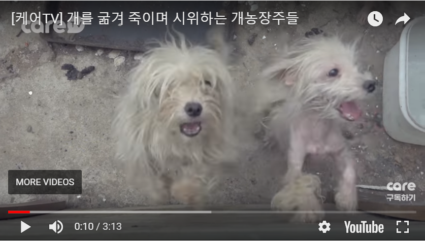 https://koreandogs.org/hanam-dog-slaughters-extortion/?utm_source=sendinblue&utm_campaign=Your_Actions_Can_Save_Lives!&utm_medium=email