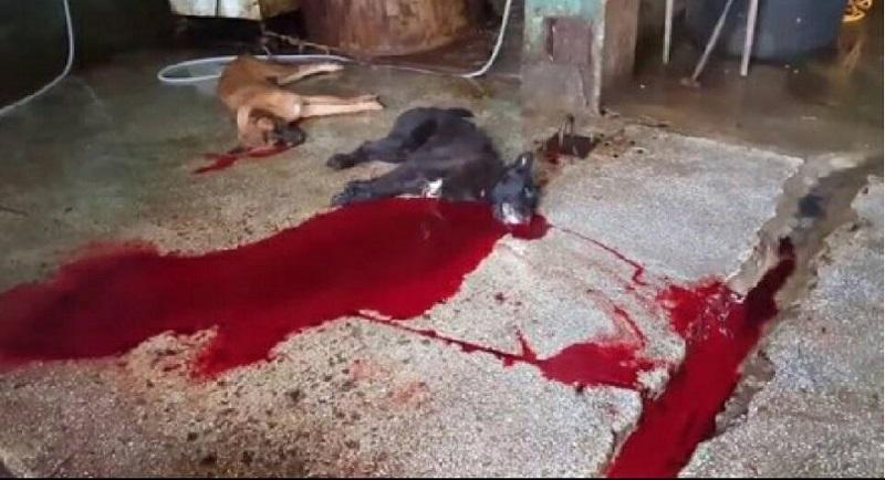 [Busan KAPCA] Shocking – Appeal deadline for Sangae-dong cruel dog slaughter case has passed