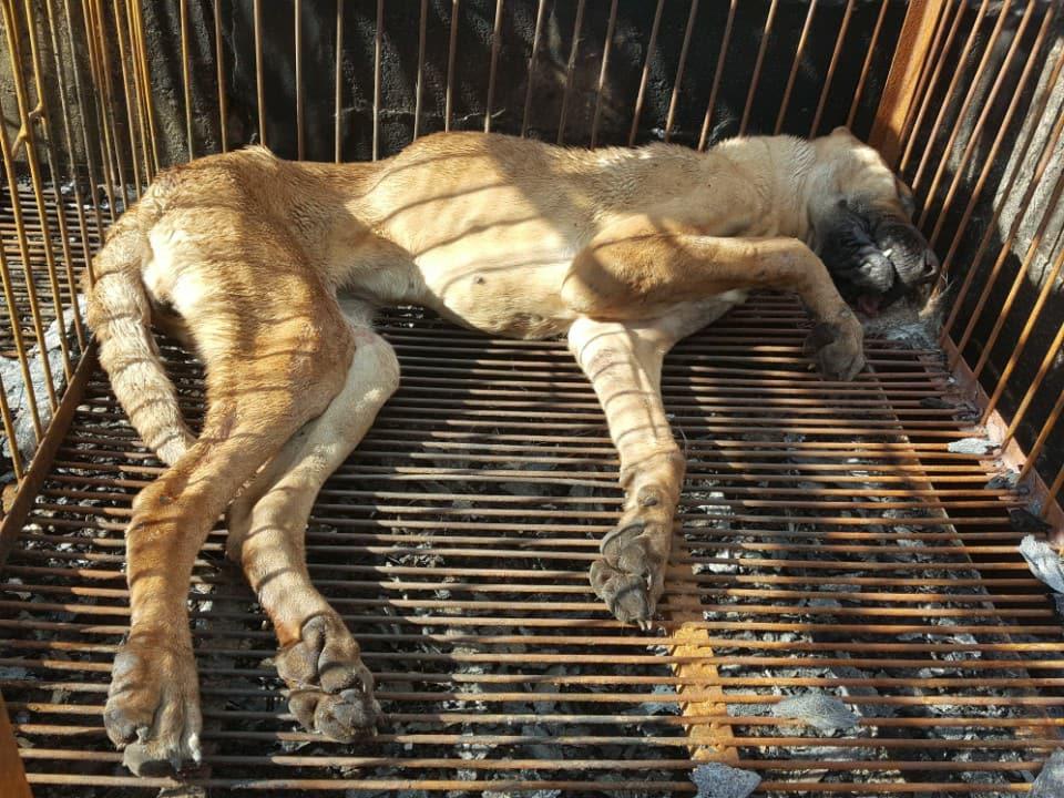 Busan KAPCA Shutting down dog farm with Ulsan Dong-gu District Office