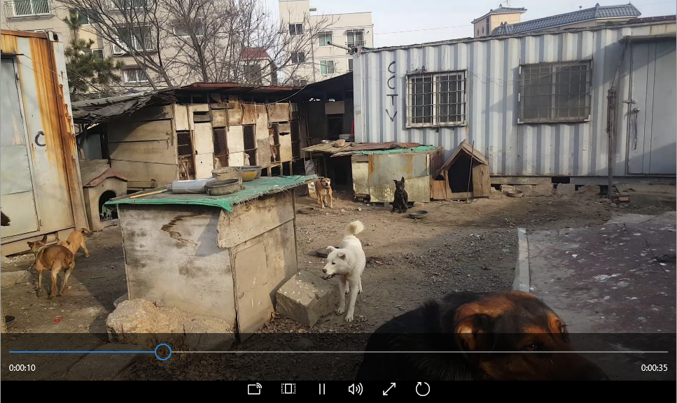 Illegal Dog Slaughter Scene in Cheongcheon-dong, Bupyeong-gu, Incheon