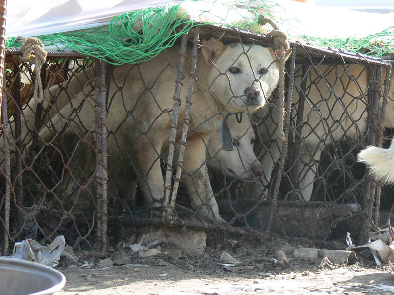 WSAVA: Speak Out Against The Dog and Cat Meat Trade in South Korea.