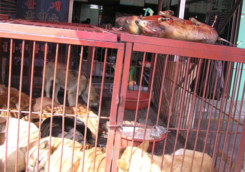 Major Victory!!! Mayor Merola of Bologna has raised his concerns to Seongnam's Mayor Lee about the dog and cat meat trade.