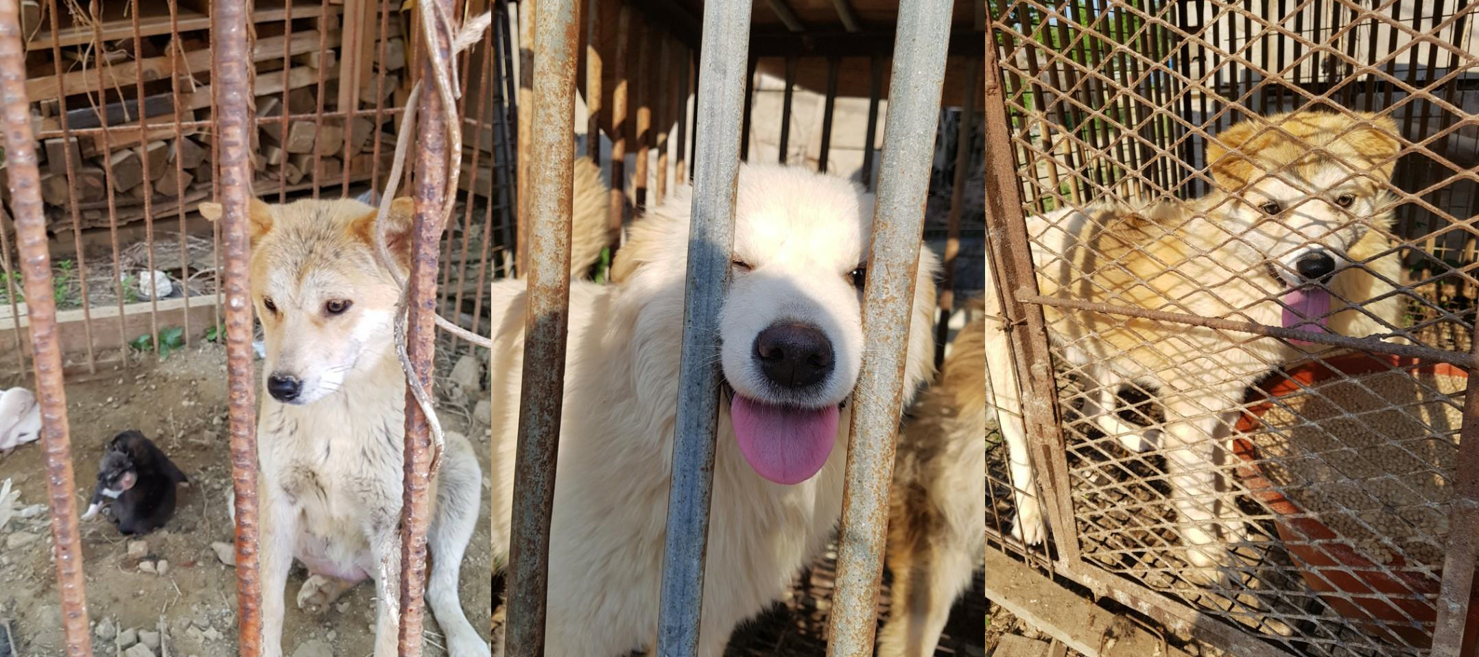 Another Rescue by Nami Kim (SaveKoreanDogs.org)