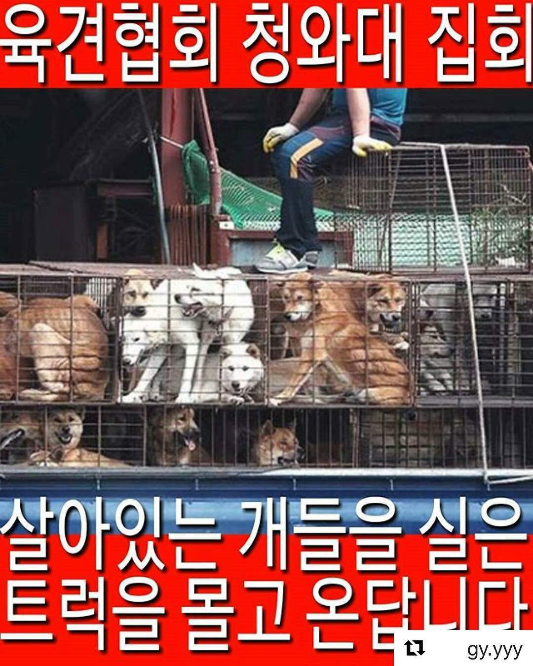 Urgent Call to Action – Stop the Korean Dog Slaughters' Demonstration in Seoul!