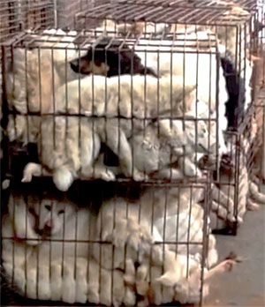 Dogs transported from Jeju to mainland Korea