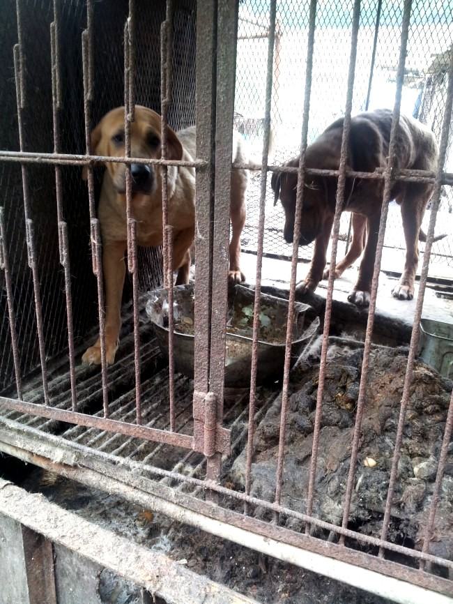 Yongdang Dog Farm Shut Down
