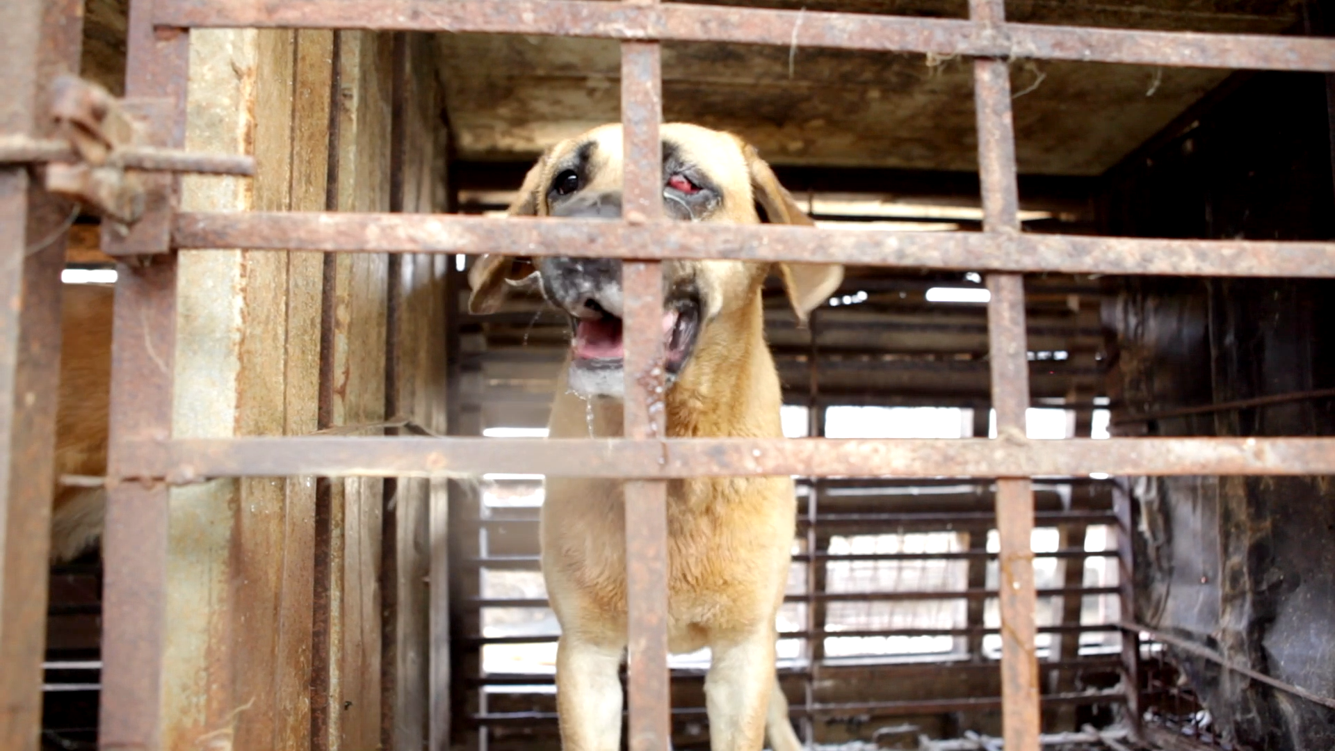 South Korea's Dog Meat Trade
