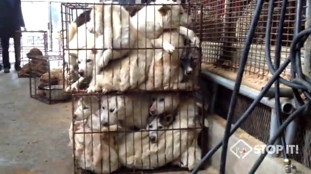 Shocking Cruelty of South Korean Dog Meat Industry(Undercover Video by Stop It! Korea)