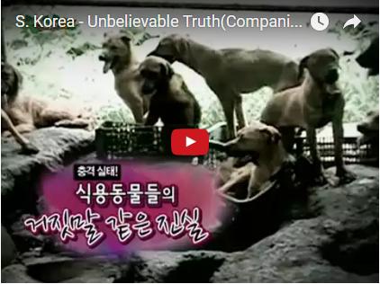 S. Korea – Unbelievable Truth (Companion Animals for Consumption)