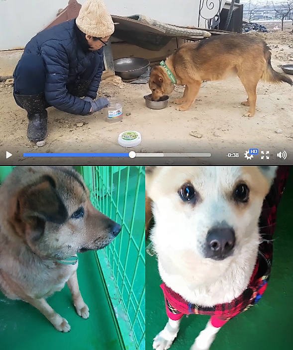 https://www.facebook.com/SaveKoreanDogs/posts/1028678537282206?utm_source=sendinblue&utm_campaign=Countdown_Has_Begun!__Busan_KAPCA_Yangsan_rescue_update&utm_medium=email