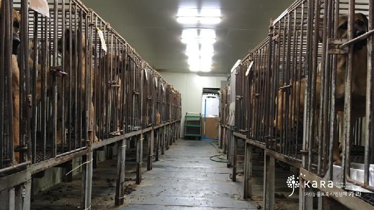 [Press Conference] Seoul National University's Dark Connection with Dog Meat Farms – We Demand the Truth from SNU!