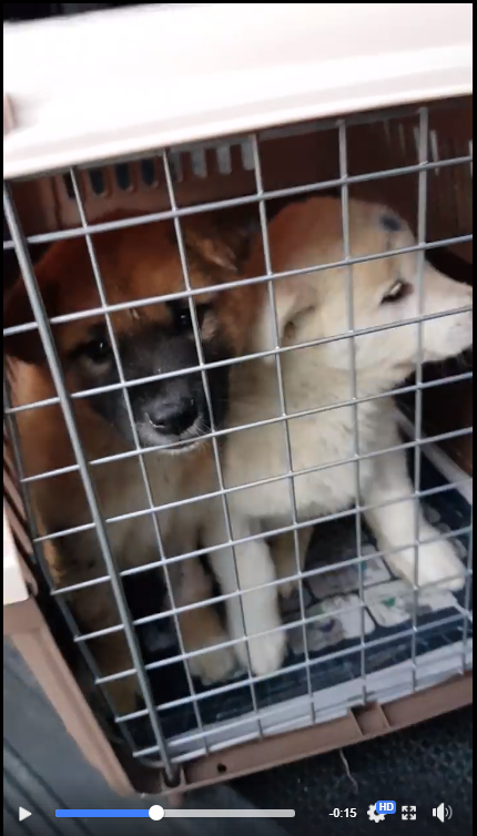 https://www.facebook.com/SaveKoreanDogs/videos/vb.425073497642716/1102327953250597/?type=2&theater&utm_source=sendinblue&utm_campaign=Seoul_National_Universitys_Dark_Connection_with_Dog_Meat_Farms__We_Demand_the_Truth_from_SNU!&utm_medium=email