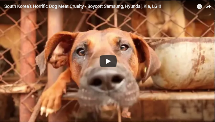https://youtu.be/nVnoMicNrNY?utm_source=sendinblue&utm_campaign=URGENT__DEADLINES_APPROACHING_Clicks_for_2_Official_Korean_Government_Petitions_against_Dog_and_Cat_Meat_Consumption!&utm_medium=email