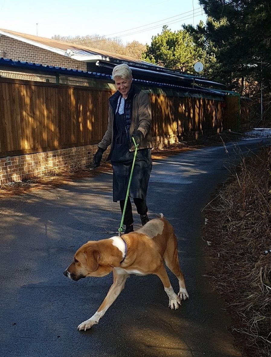 http://savekoreandogs.org/dogs-available-for-adoption/?utm_source=sendinblue&utm_campaign=South_Koreas_filthy_dog_meat_trade_noshopit2stopit&utm_medium=email