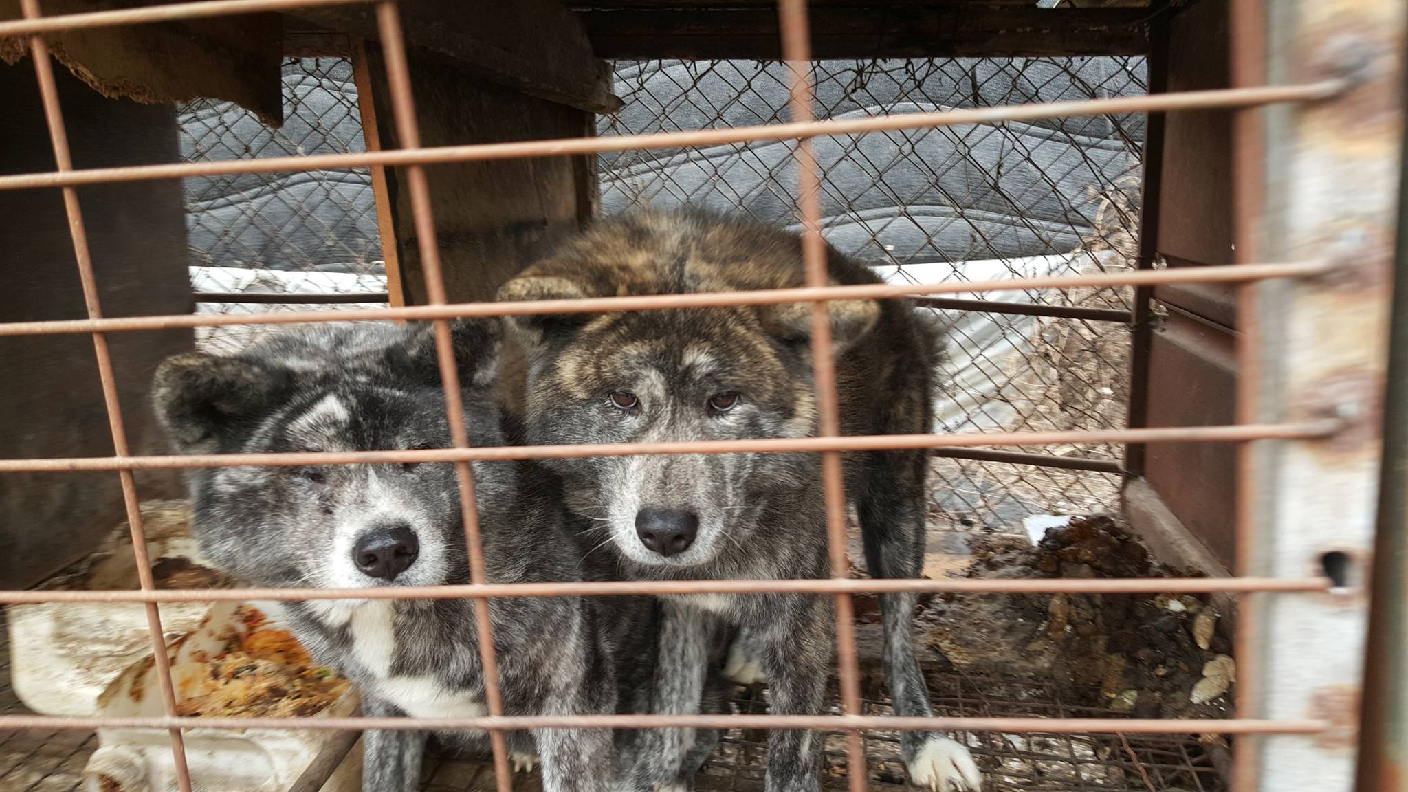 Victory! Incheon Kyesan Dog Farm to shut down and the launch of tax evasion investigation