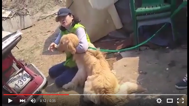 More hard work – more lives saved: 5 more dogs rescued from an Incheon Munhak-dong dog farm by Nami Kim and her Team