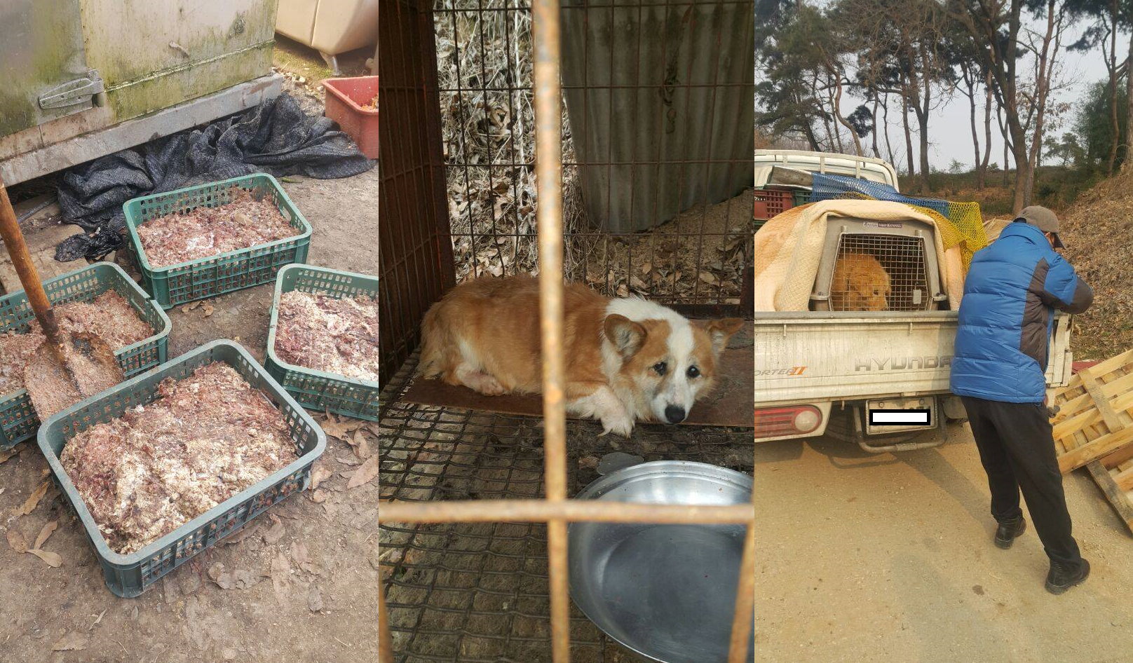 Call for Action: Illegal puppy mill/dog farm in Nonsan, Deokpyeong-ri.