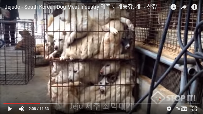 Jejudo - South Korean Dog Meat Industry 제주도 개농장, 개 도살장
