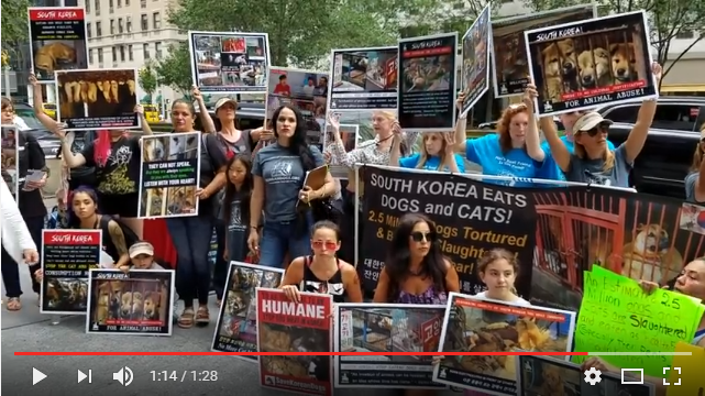 www. theirturn.net. Dozens of Activists Protest Dog Meat Eating Festival At Korean Consulate