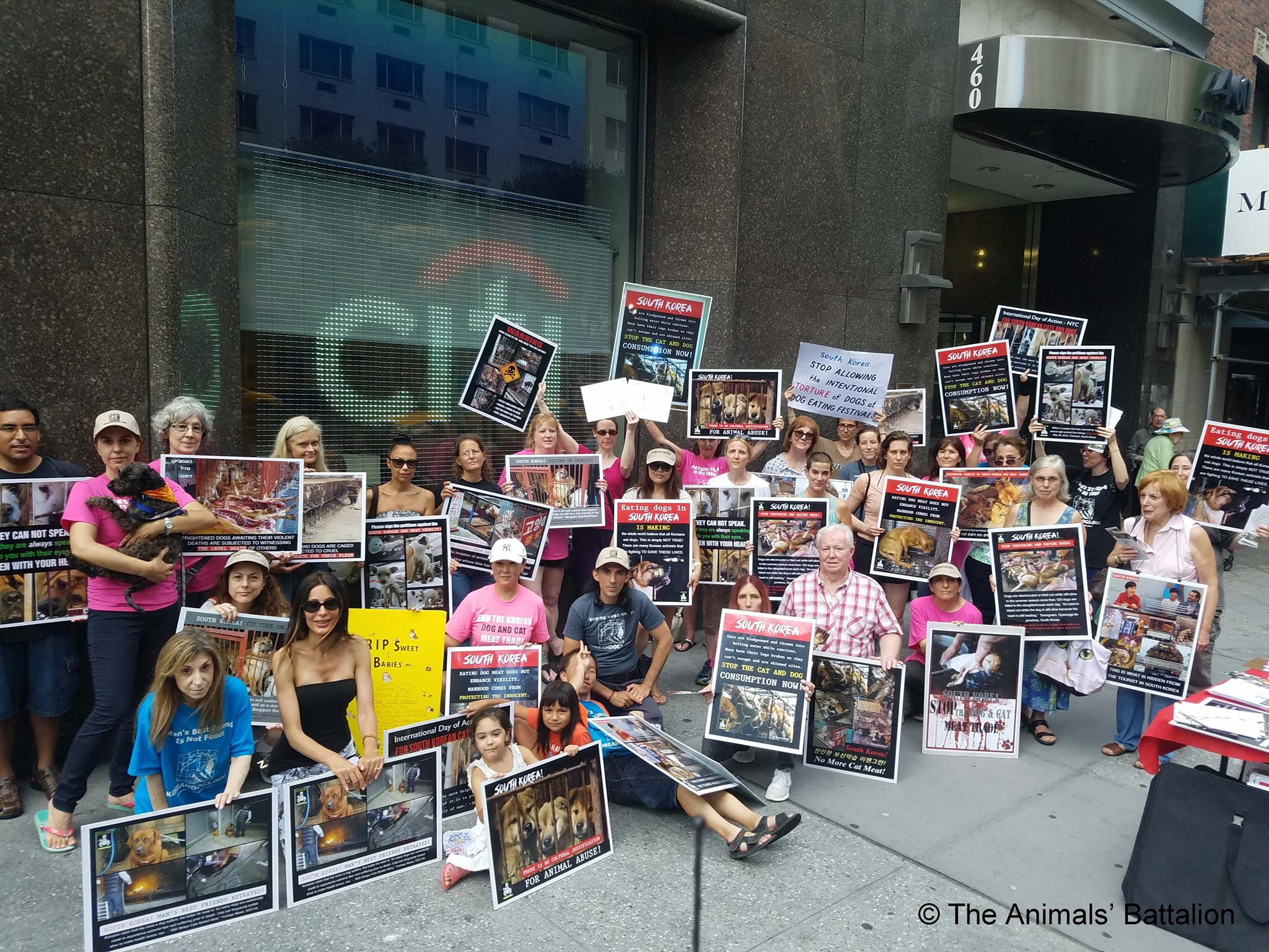The Animals' Battalion 2017 'Boknal' Demonstrations in New York