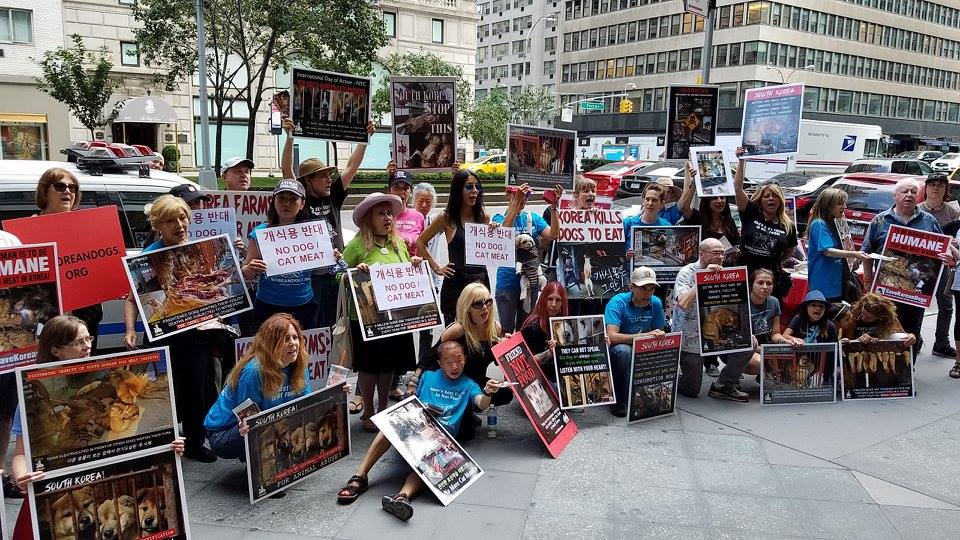 New York, South Korean Consulate General, 'Boknal' Demonstration for the South Korean Dogs and Cats (Day 3) – August 11, 2017 Organized by The Animals' Battalion