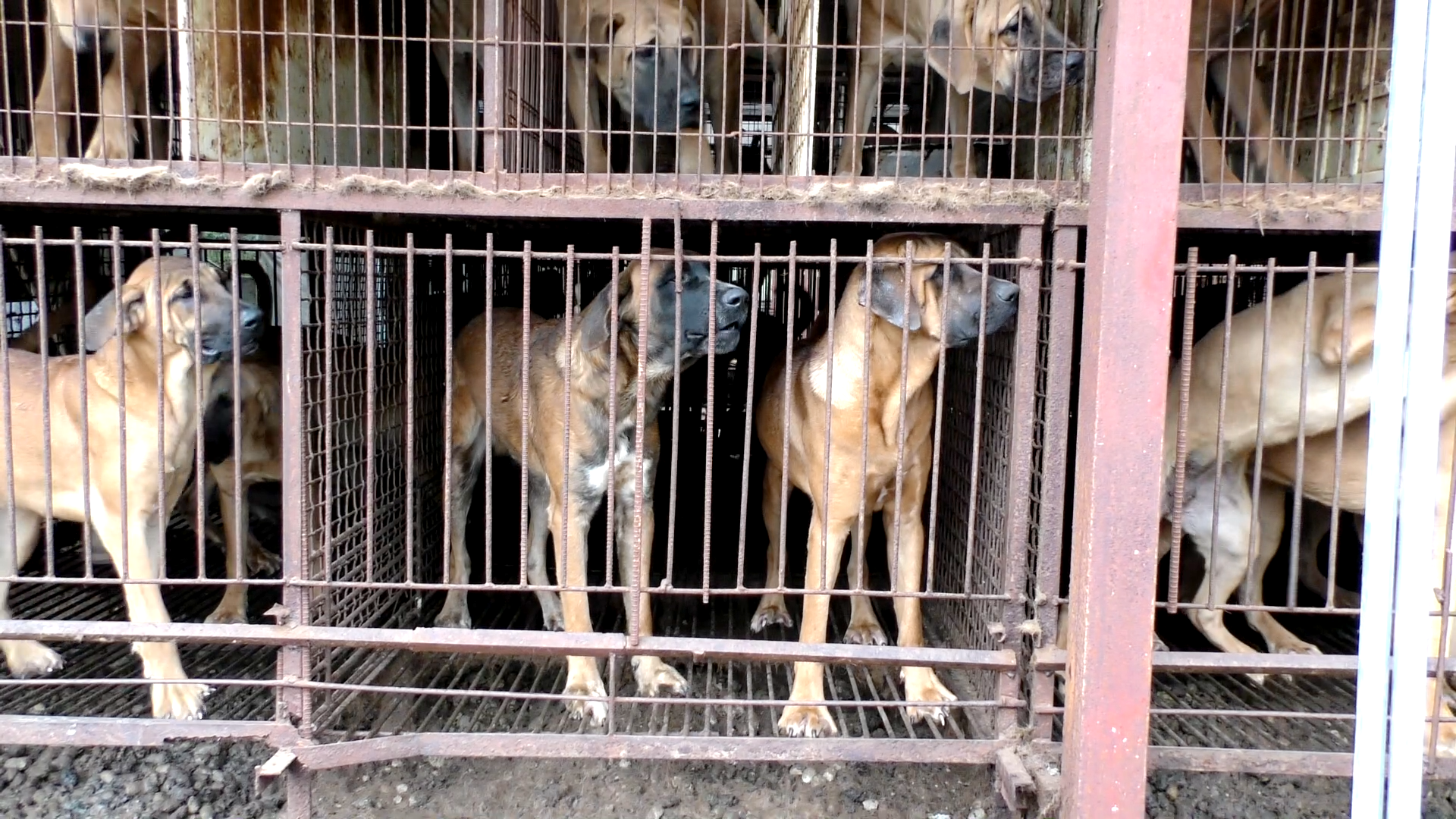 Photo: The Dog Meat Professionals: South Korea.  The Korea Observer.