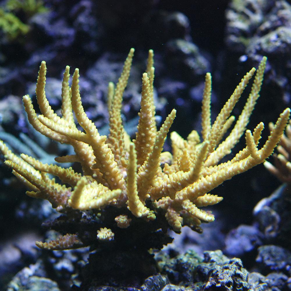 La recherche scientifique à l'Aquarium tropical