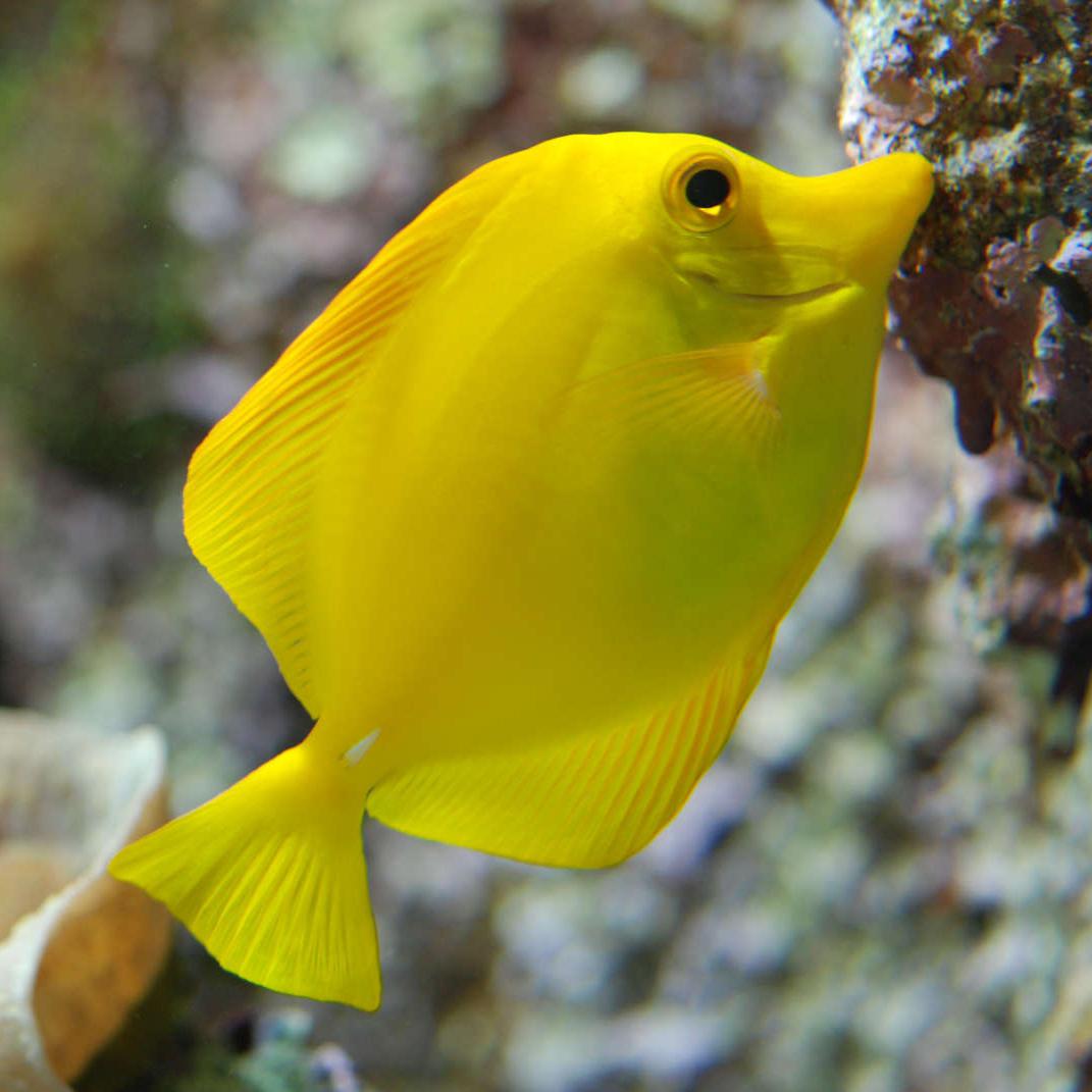 L'alimentation des poissons