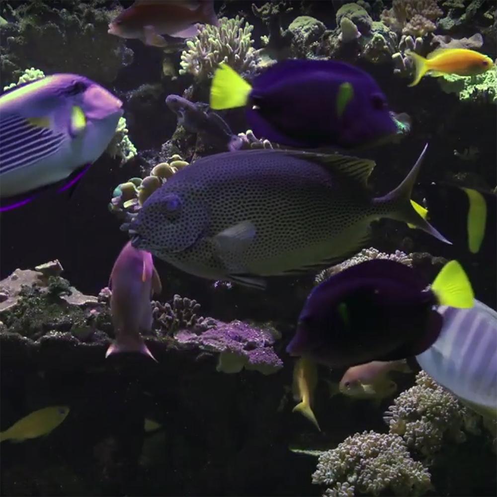 La reproduction des poissons
