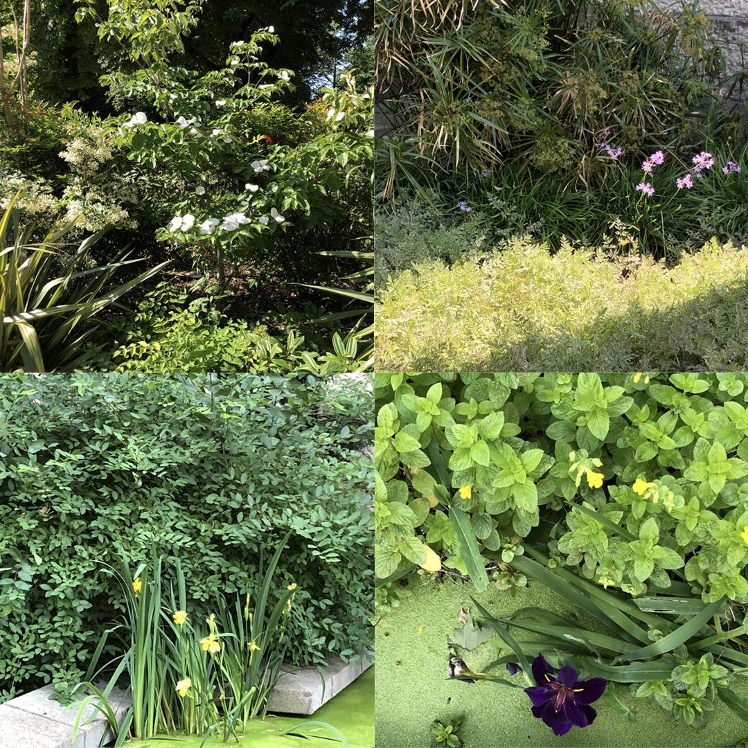 Les plantations du jardin