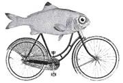 Affichez les images pour voir un beau poisson