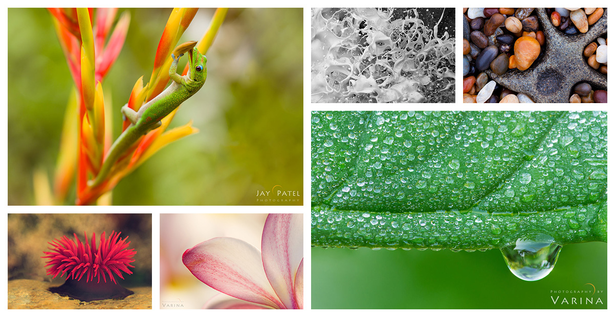 Ideas for creating clean  backgrounds for Macro Photography