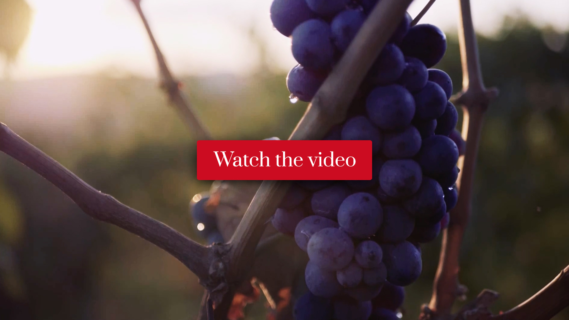 Alessandro Berselli Vigneti & Vini Video Presentation