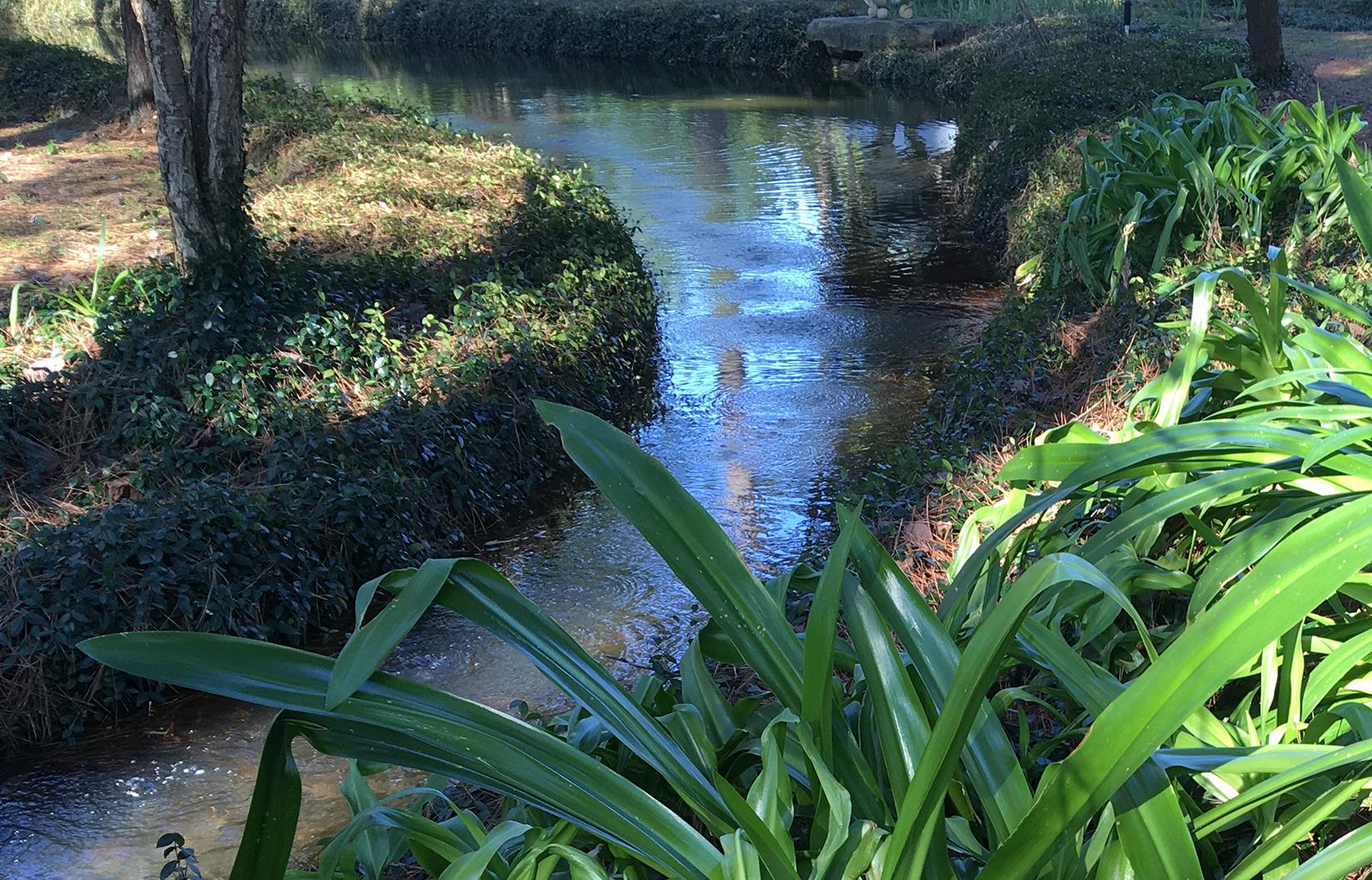 A stream in Houston's Hermann Park Japanese Garden