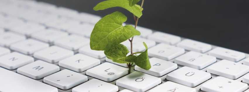 Aus einer Computer-Tastatur wächst ein zartes, grünes Pflänzchen (Motiv Campus Innovation, MMKH)